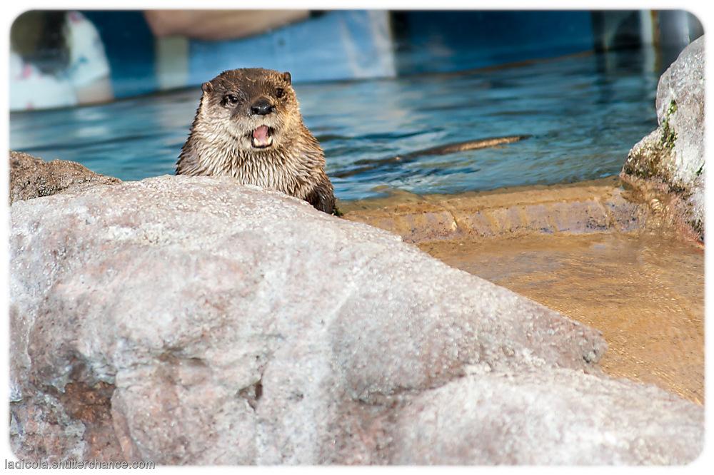 photoblog image Otter